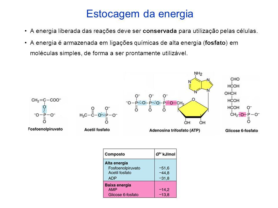 Estocagem da energia A energia liberada das reações deve ser conservada para utilização pelas células.