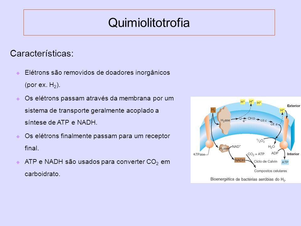 Quimiolitotrofia Características: