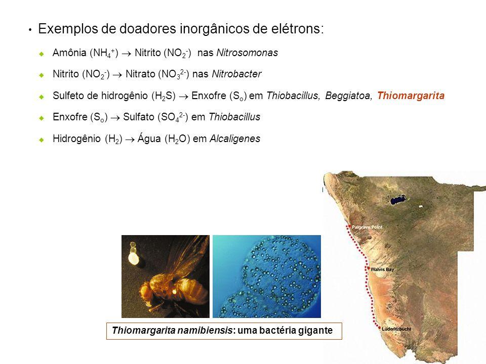 Exemplos de doadores inorgânicos de elétrons: