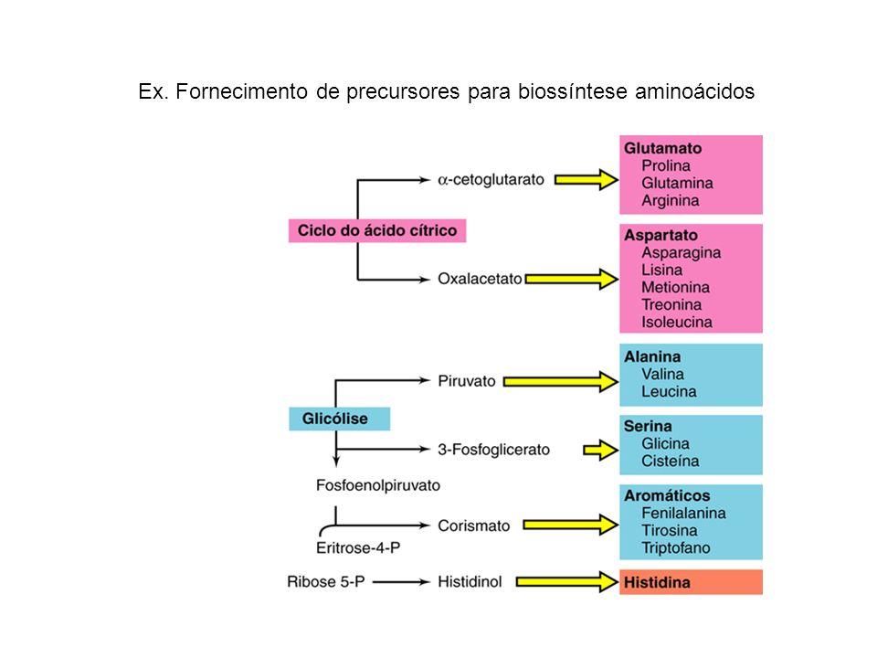 Ex. Fornecimento de precursores para biossíntese aminoácidos