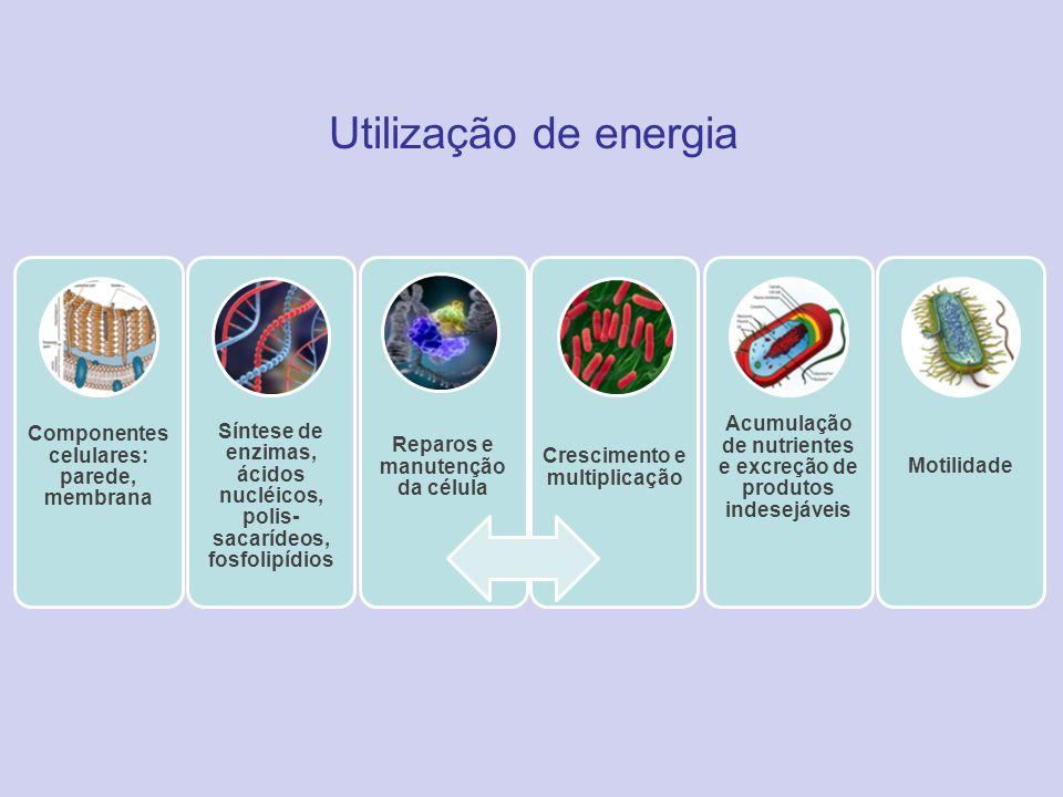 Utilização de energia Componentes celulares: parede, membrana