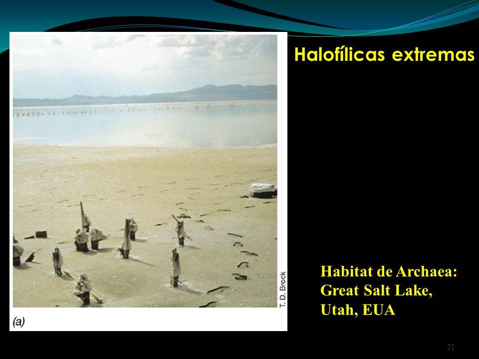 Halofílicas extremas Habitat de Archaea: Great Salt Lake, Utah, EUA