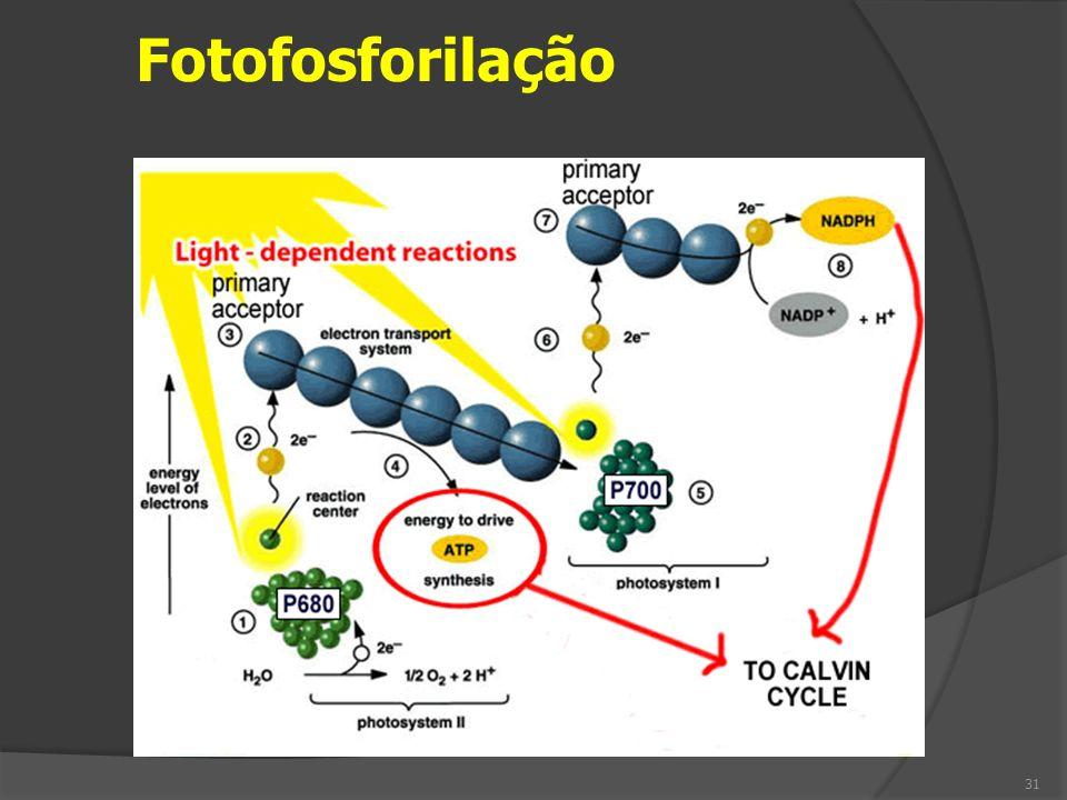 Fotofosforilação