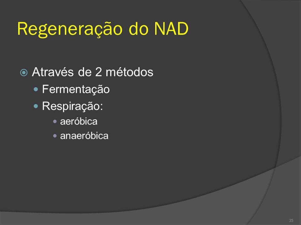 Regeneração do NAD Através de 2 métodos Fermentação Respiração: