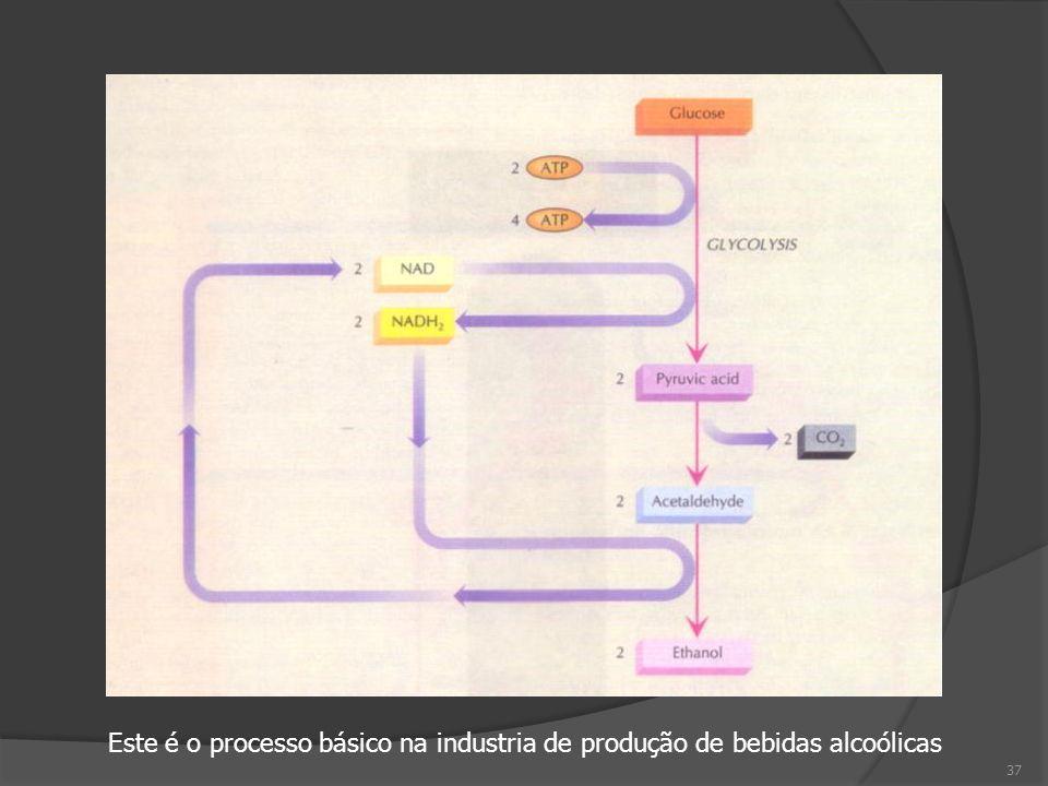 Este é o processo básico na industria de produção de bebidas alcoólicas