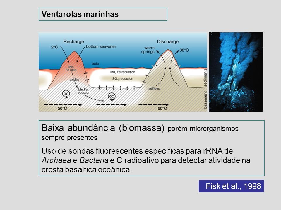 Baixa abundância (biomassa) porém microrganismos sempre presentes