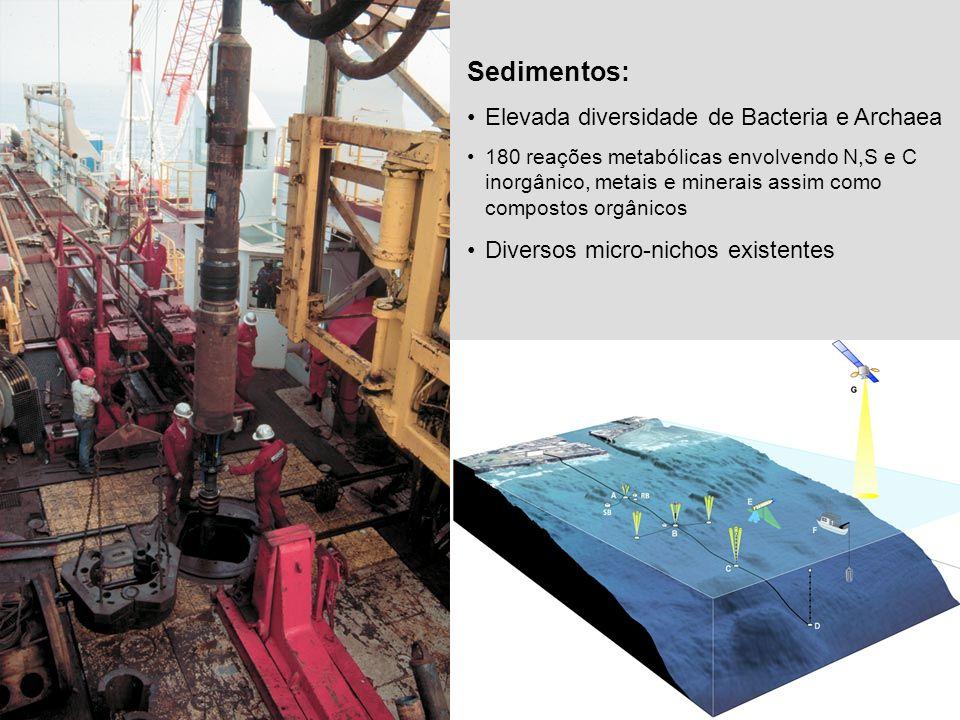 Sedimentos: Elevada diversidade de Bacteria e Archaea