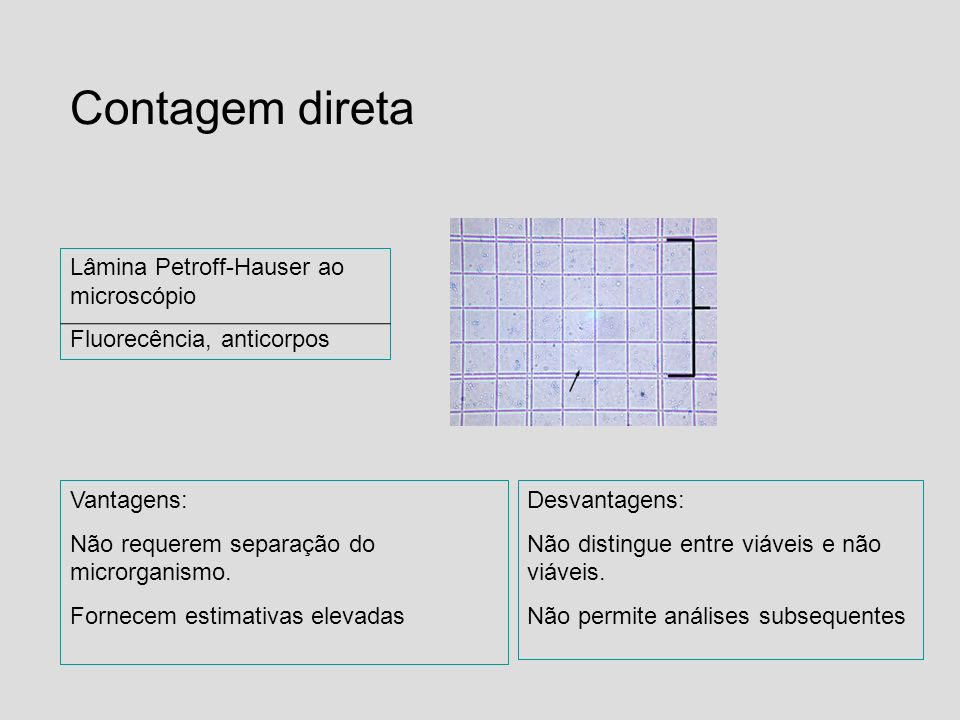 Contagem direta Lâmina Petroff-Hauser ao microscópio