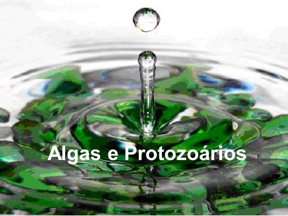 Algas e Protozoários