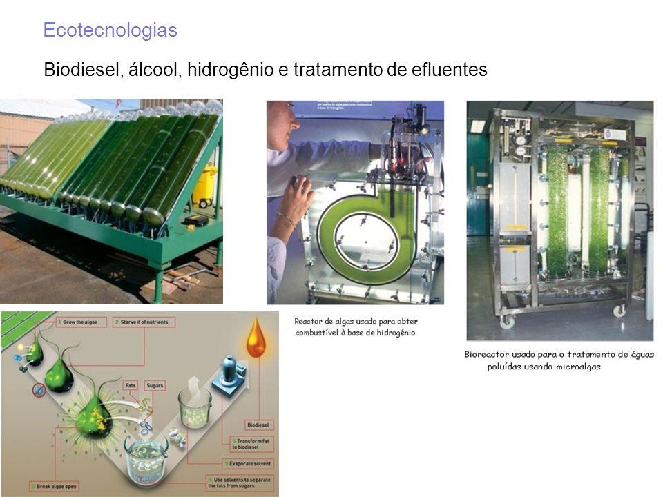 Biodiesel, álcool, hidrogênio e tratamento de efluentes