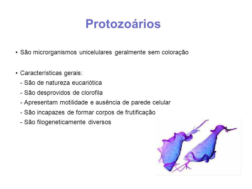 Protozoários São microrganismos unicelulares geralmente sem coloração