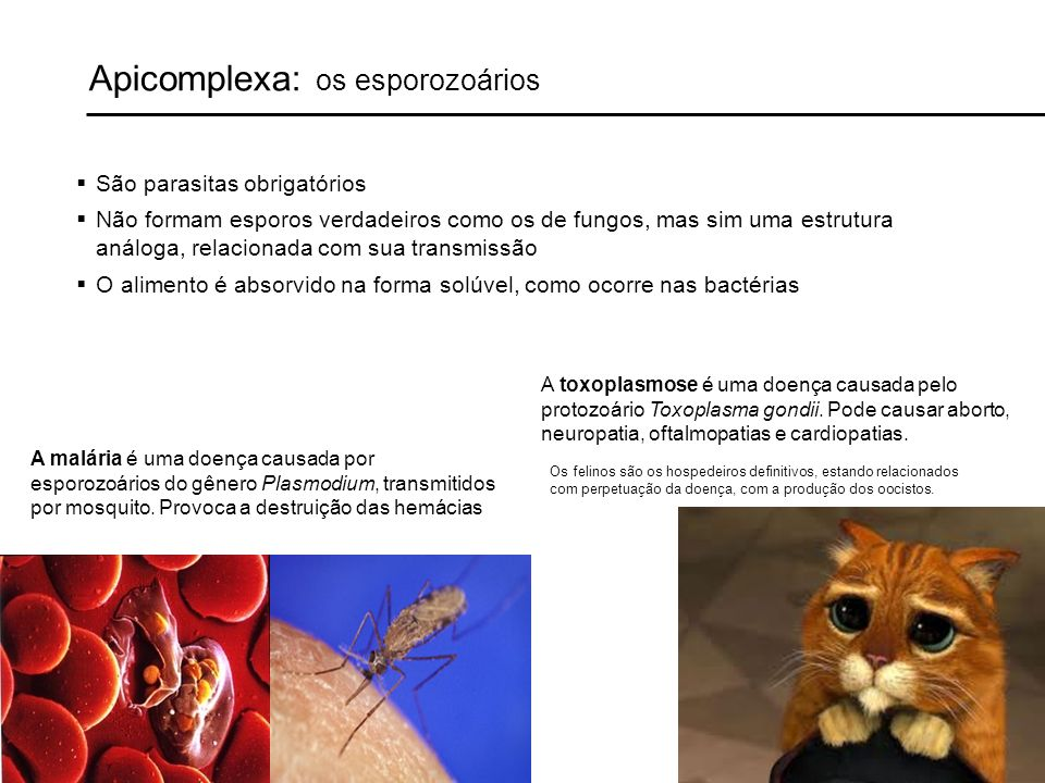 Apicomplexa: os esporozoários