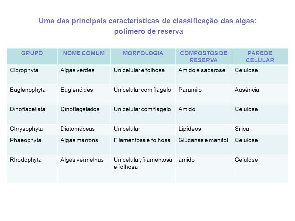 Uma das principais características de classificação das algas: