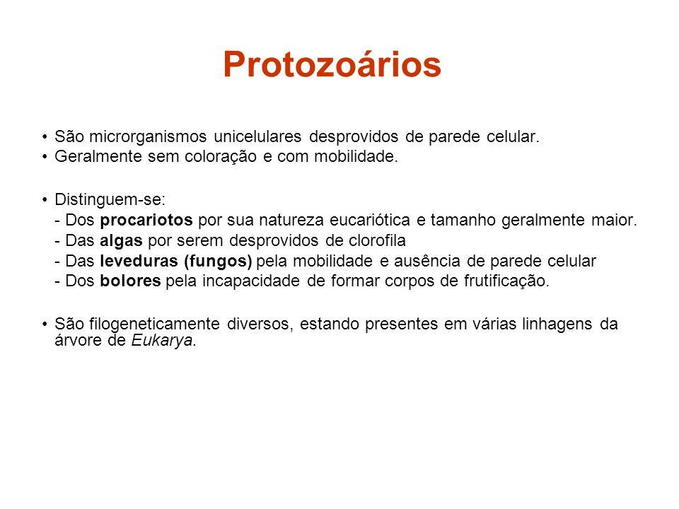Protozoários São microrganismos unicelulares desprovidos de parede celular. Geralmente sem coloração e com mobilidade.