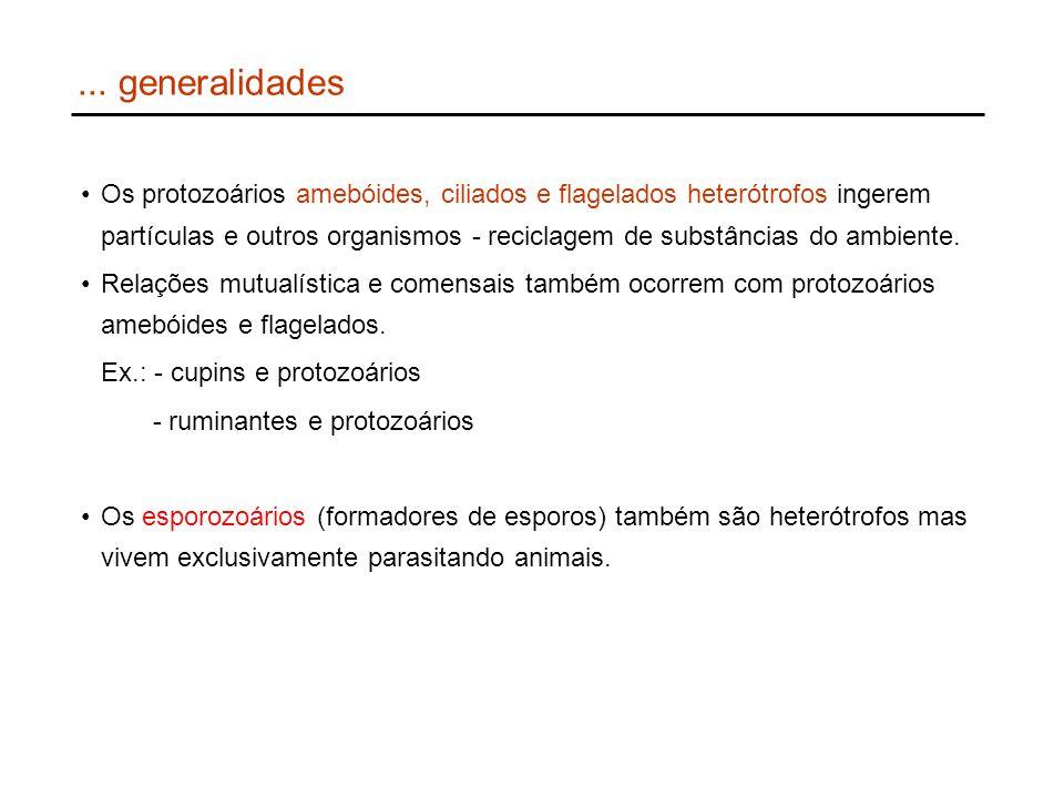 ... generalidades