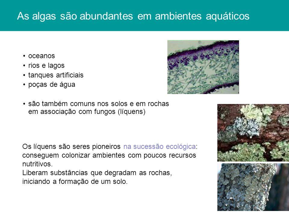 As algas são abundantes em ambientes aquáticos