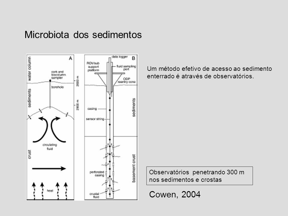 Microbiota dos sedimentos