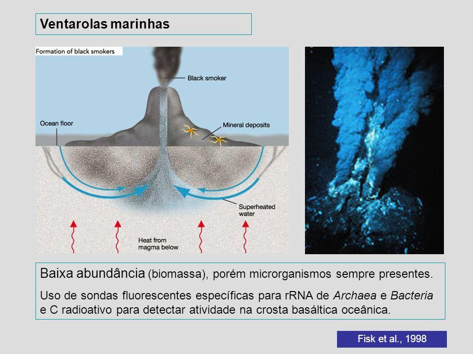 Baixa abundância (biomassa), porém microrganismos sempre presentes.