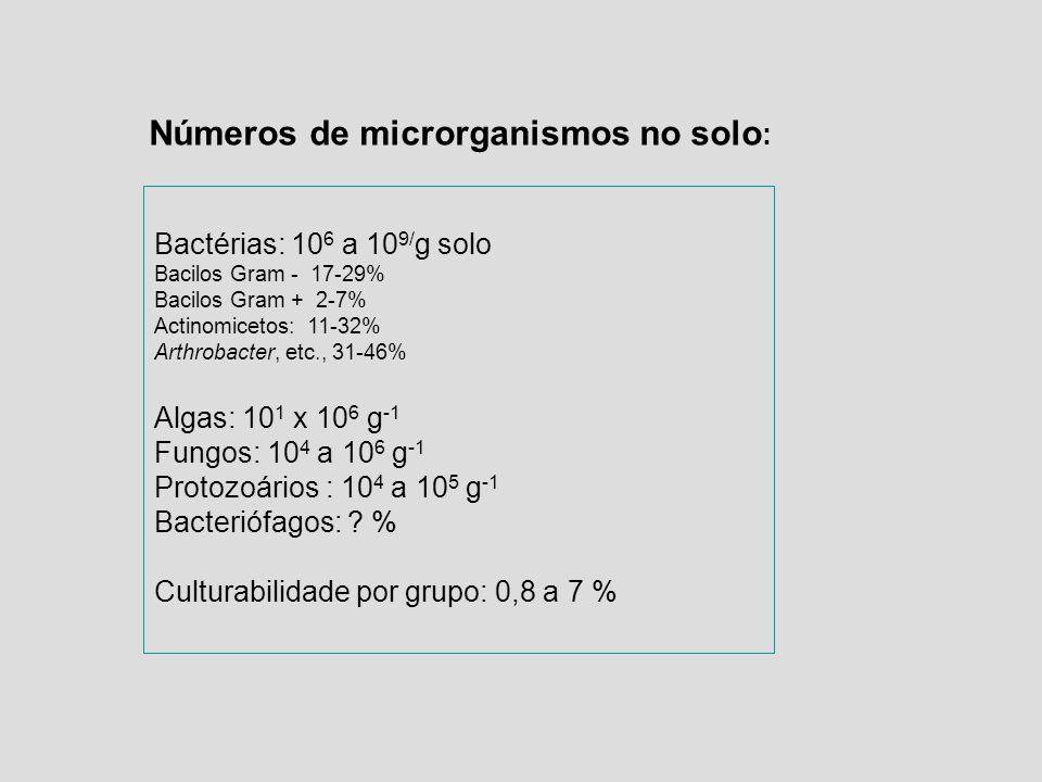 Números de microrganismos no solo: