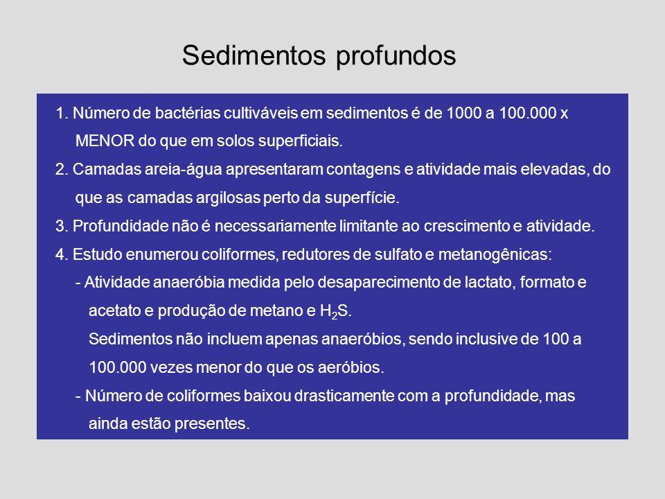 Sedimentos profundos 1. Número de bactérias cultiváveis em sedimentos é de 1000 a 100.000 x MENOR do que em solos superficiais.
