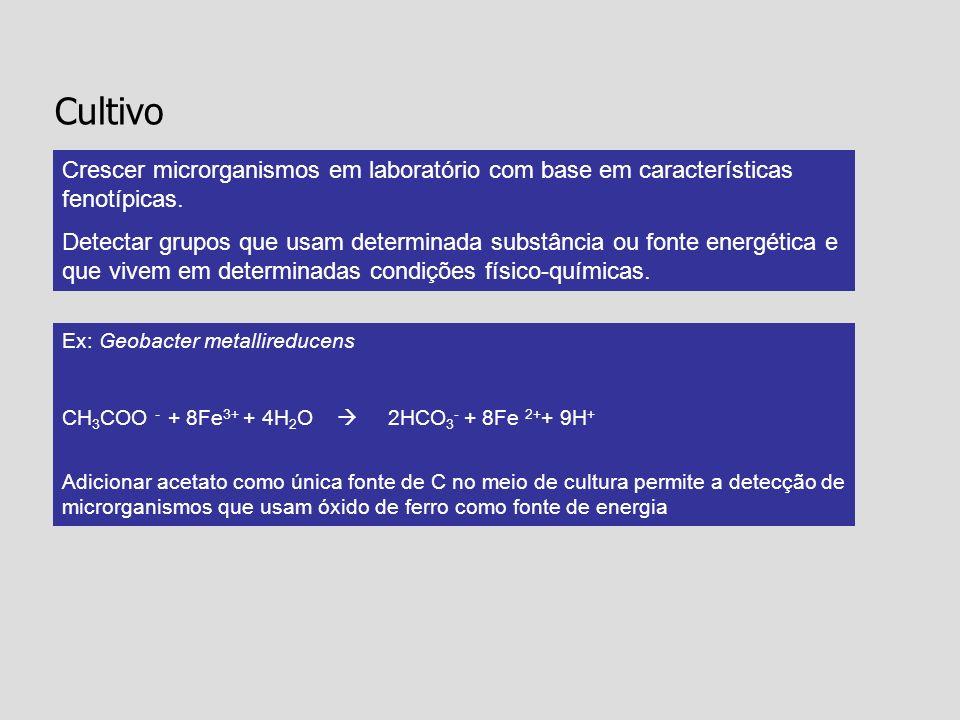 Cultivo Crescer microrganismos em laboratório com base em características fenotípicas.