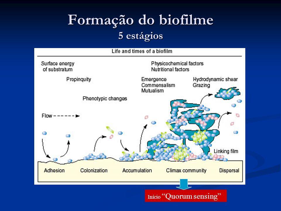 Formação do biofilme 5 estágios