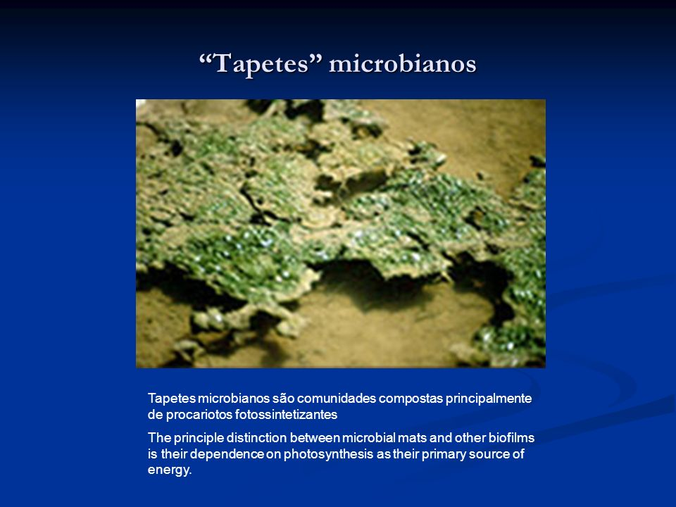 Tapetes microbianos