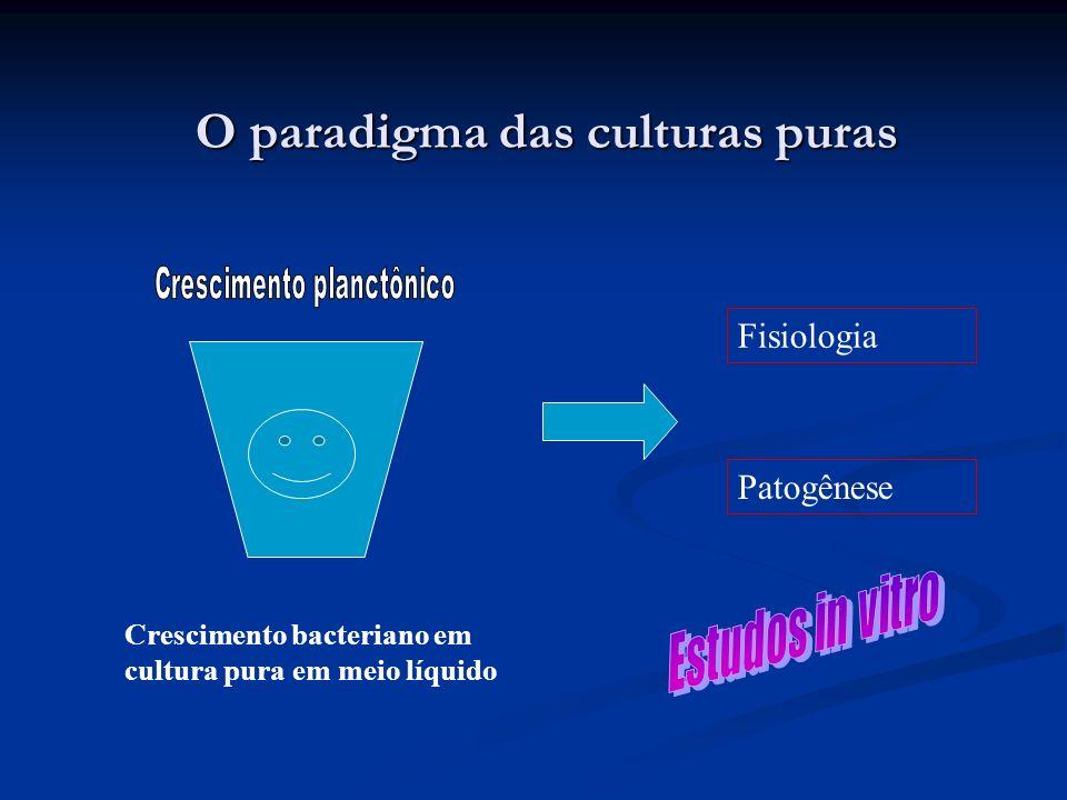 O paradigma das culturas puras