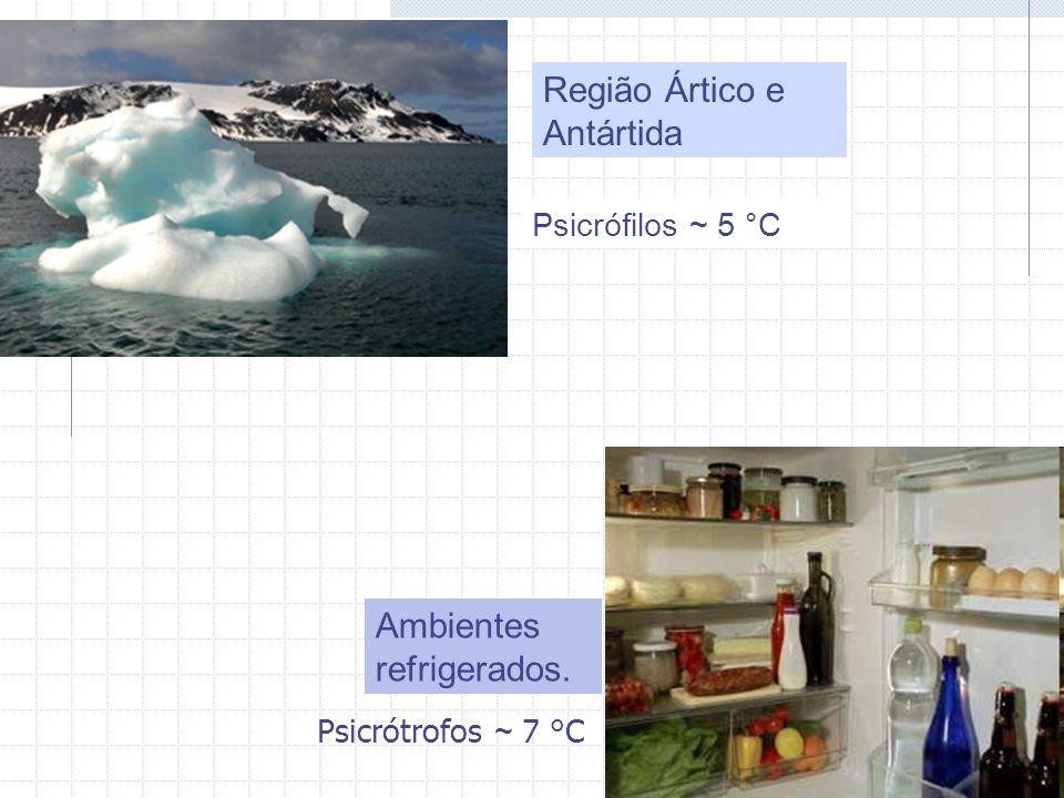 Região Ártico e Antártida