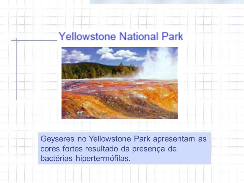Geyseres no Yellowstone Park apresentam as cores fortes resultado da presença de bactérias hipertermófilas.