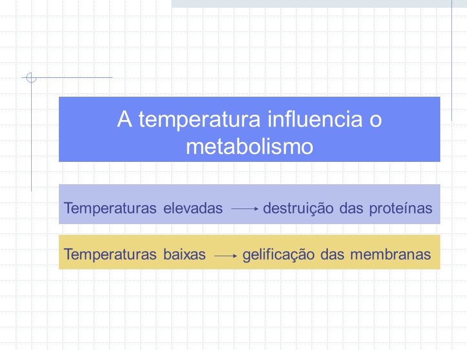 A temperatura influencia o metabolismo