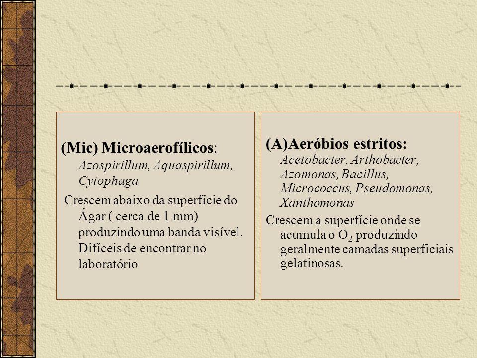 (Mic) Microaerofílicos: Azospirillum, Aquaspirillum, Cytophaga