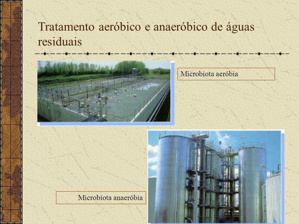 Tratamento aeróbico e anaeróbico de águas residuais