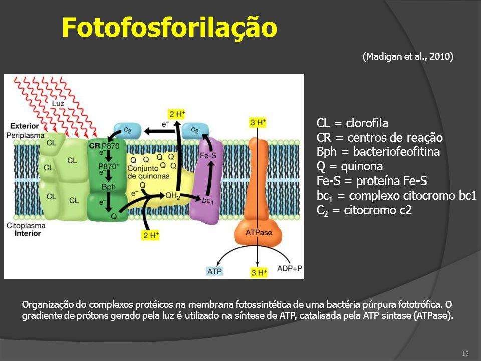 Fotofosforilação CL = clorofila CR = centros de reação