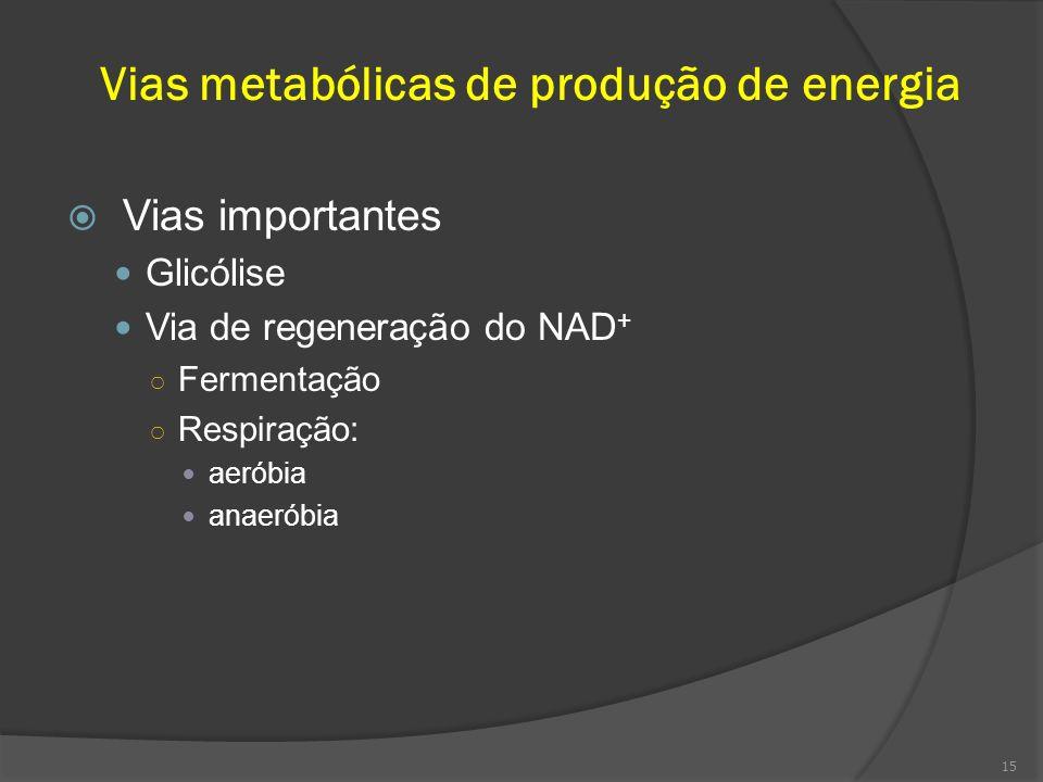 Vias metabólicas de produção de energia