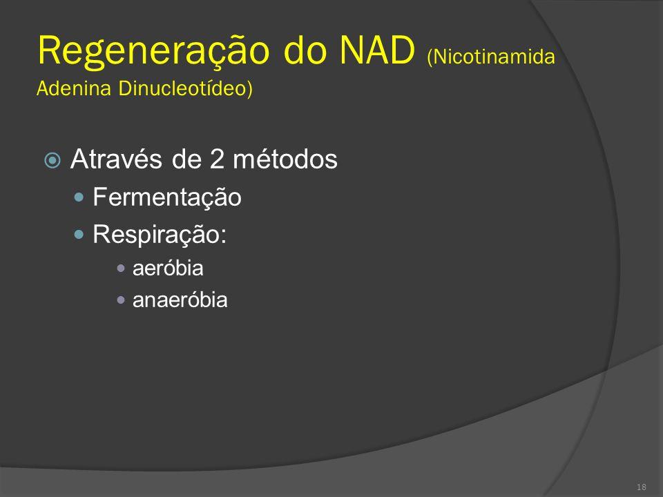 Regeneração do NAD (Nicotinamida Adenina Dinucleotídeo)
