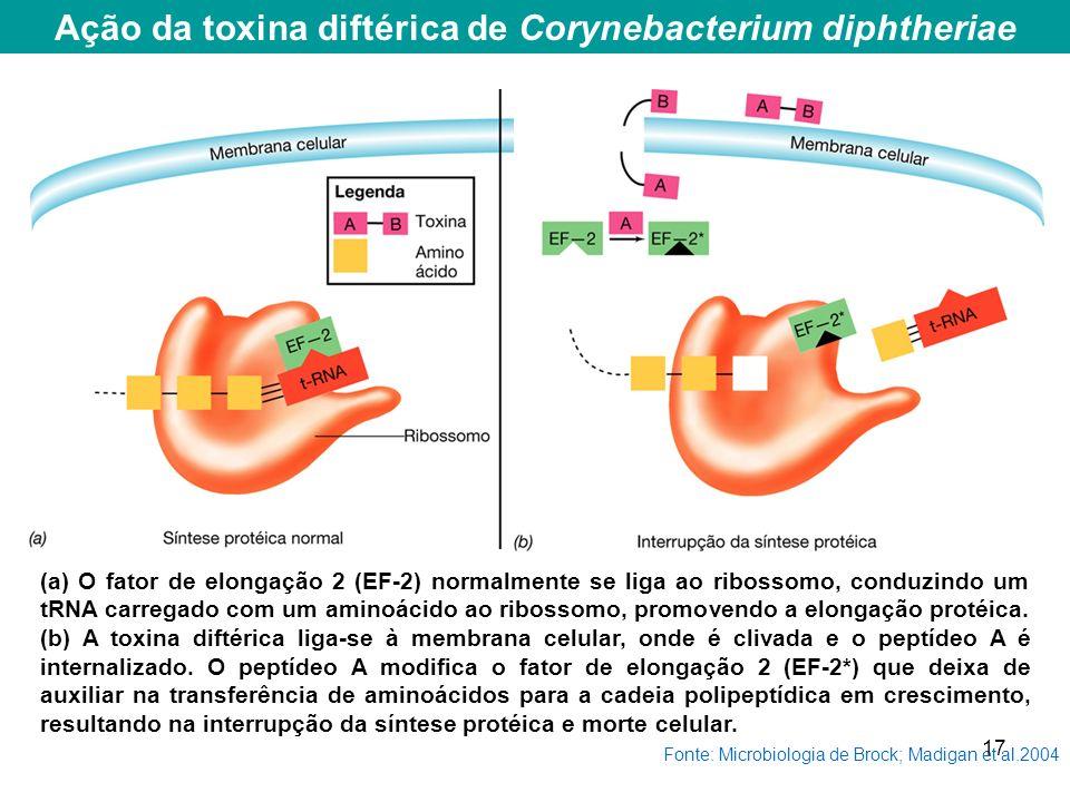 Ação da toxina diftérica de Corynebacterium diphtheriae