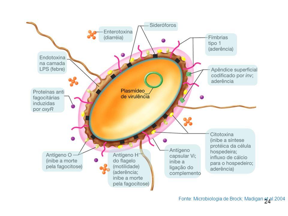 Fonte: Microbiologia de Brock; Madigan et al.2004