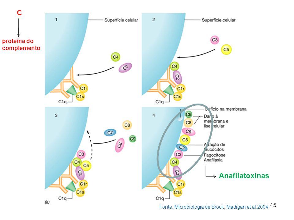 C Anafilatoxinas proteína do complemento