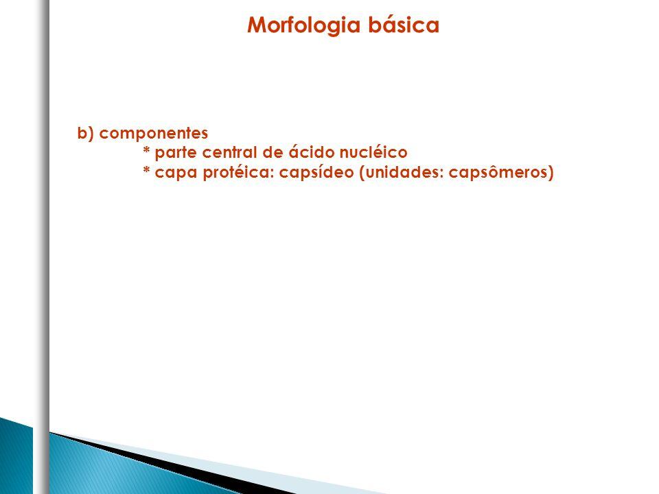 Morfologia básica b) componentes * parte central de ácido nucléico