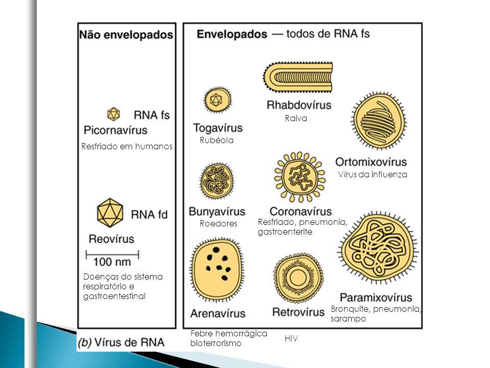 Raiva Rubéola. Resfriado em humanos. Vírus da influenza. Roedores. Resfriado, pneumonia, gastroenterite.