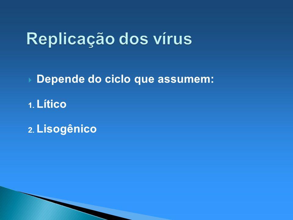 Replicação dos vírus Depende do ciclo que assumem: Lítico Lisogênico