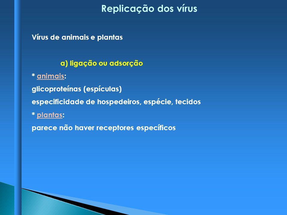 Replicação dos vírus Vírus de animais e plantas a) ligação ou adsorção
