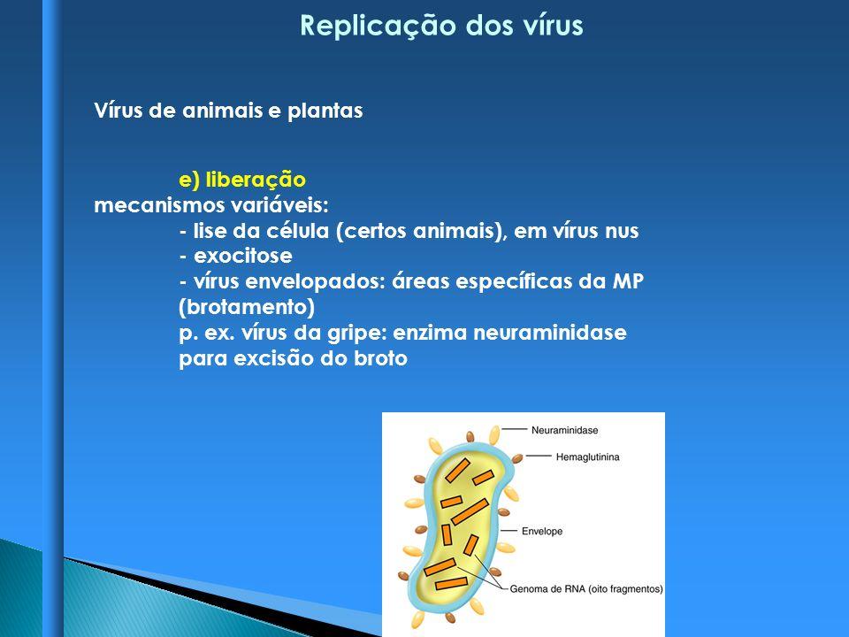Replicação dos vírus Vírus de animais e plantas e) liberação