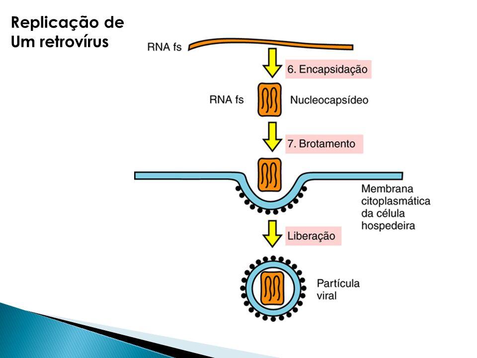 Replicação de Um retrovírus