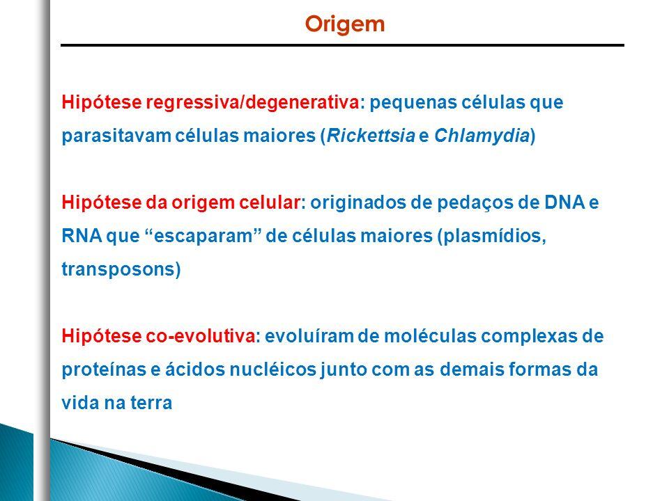 Origem Hipótese regressiva/degenerativa: pequenas células que parasitavam células maiores (Rickettsia e Chlamydia)