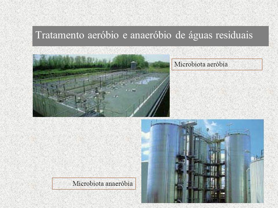 Tratamento aeróbio e anaeróbio de águas residuais