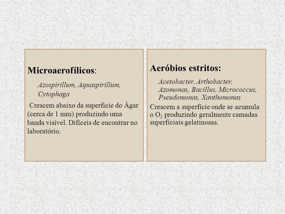 Azospirillum, Aquaspirillum, Cytophaga Aeróbios estritos: