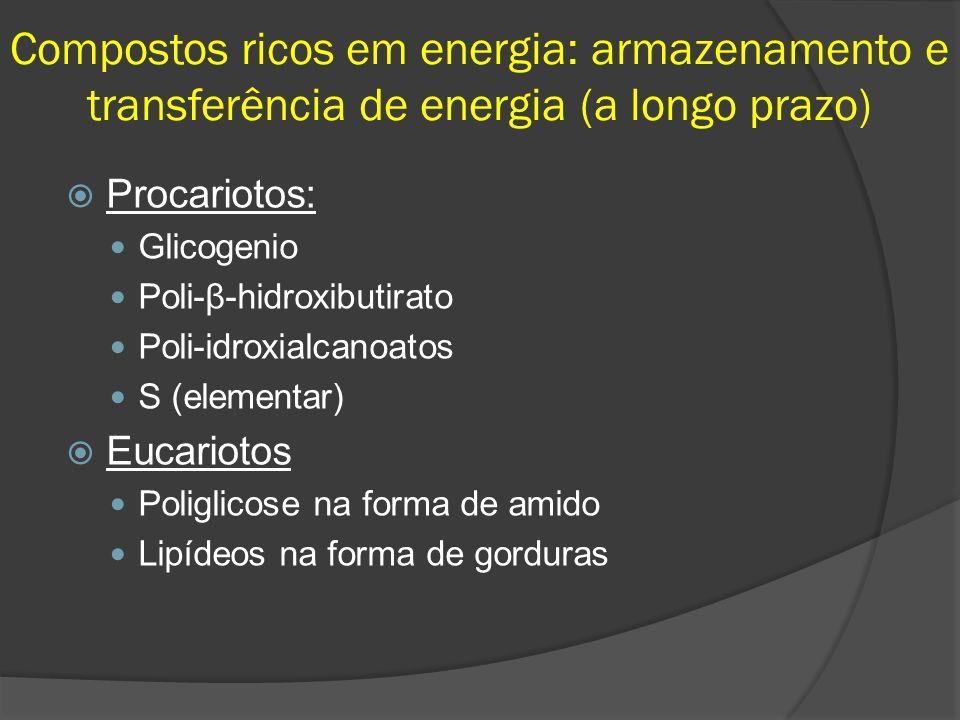 Compostos ricos em energia: armazenamento e transferência de energia (a longo prazo)