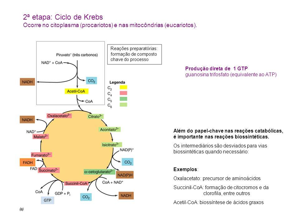 2ª etapa: Ciclo de KrebsOcorre no citoplasma (procariotos) e nas mitocôndrias (eucariotos).